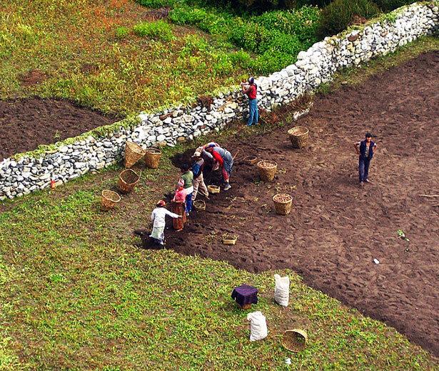 Trabajando la tierra en duras condiciones a más de 4.000 metros de altura