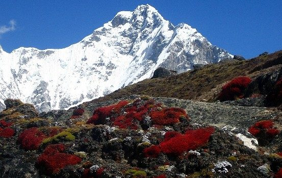 nuptse-gorak-sheep-everest