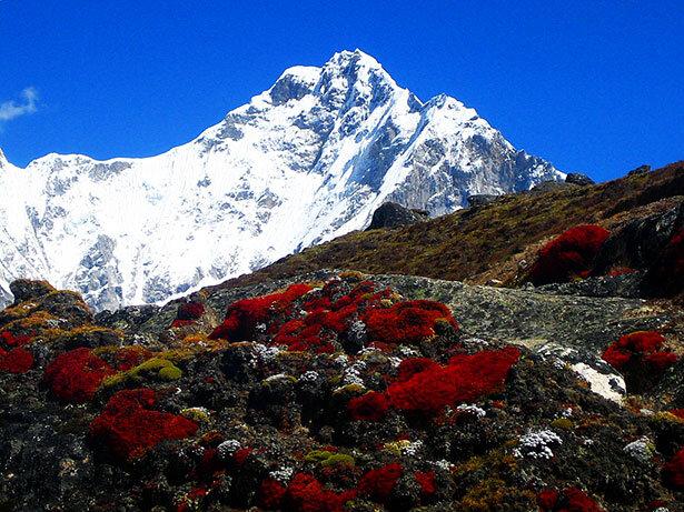 El Nuptse y la increíble vegetación que crece a 5000 metros de altura