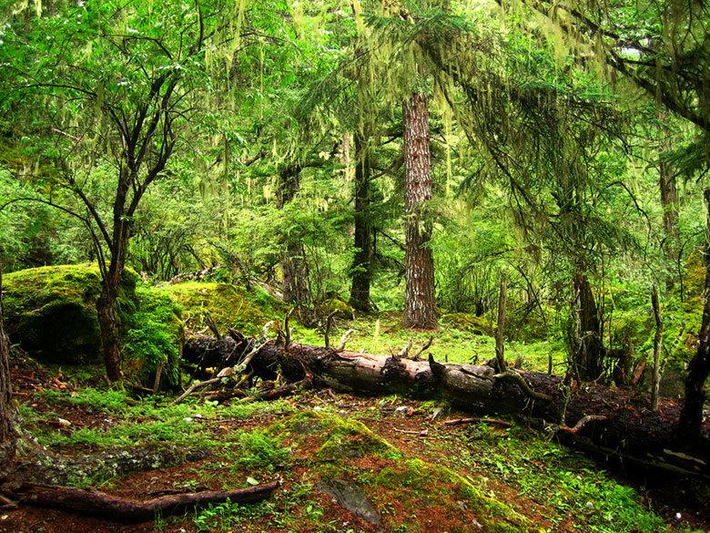 bosque-suchuan