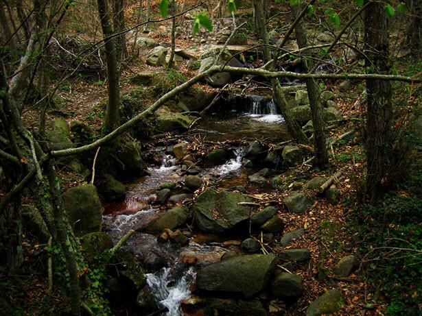 Riera de Riells en el Montseny