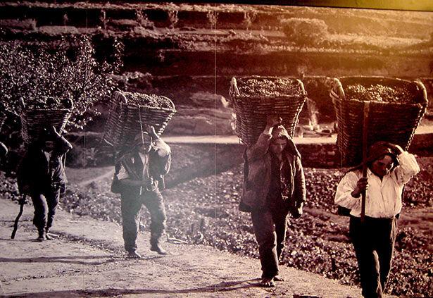 Antigua imagen en las bodegas Ferreira
