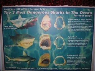 los tiburones mas peligrosos