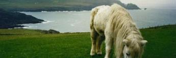 caballo-irlanda