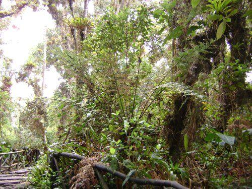 Jardin de la cocha
