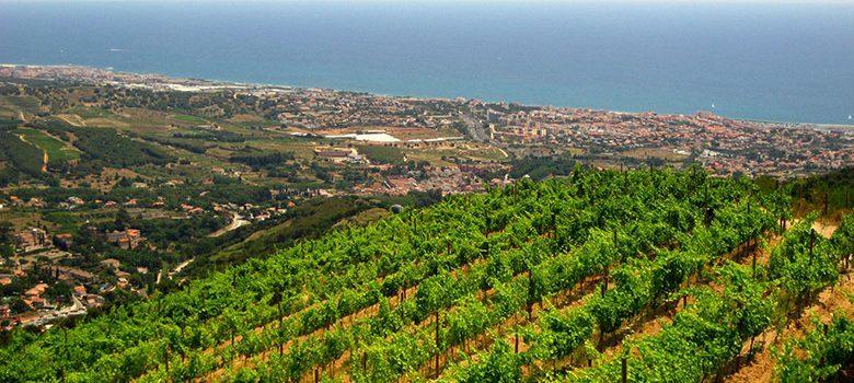 Las viñas de Tiana con vistas a Masnou y al mar