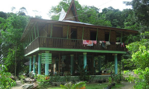 nora_rainforest_bukit_lawang