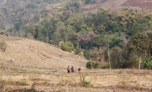 Caminando por los campos de Hsipaw