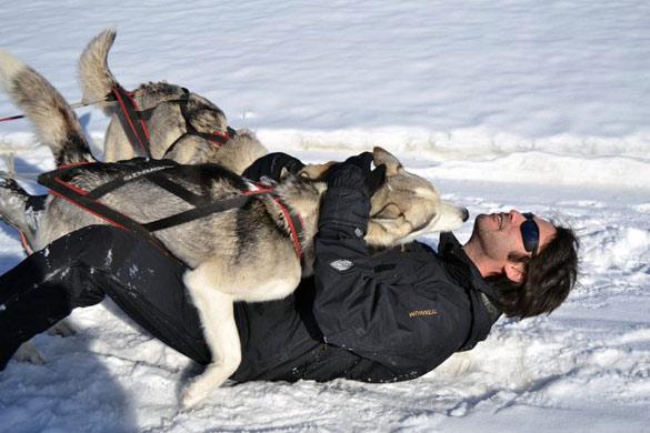 jugando_huskies_nieve