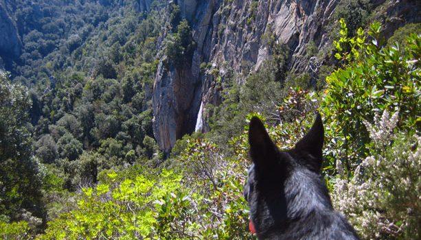 perro_cascadas_zonza