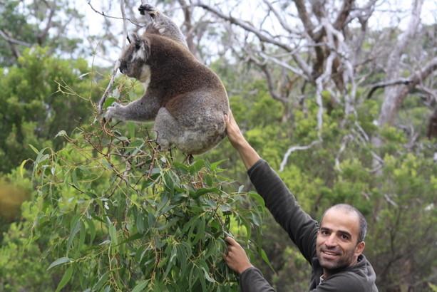 La fauna del lugar es otra buena razón para visitar un país. Sobre todo si son koalas como éste