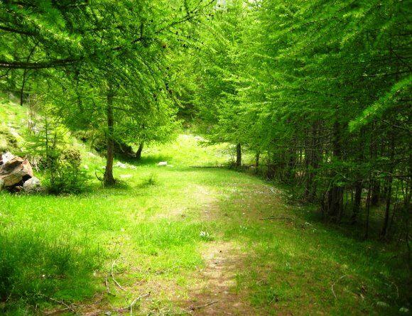 bosque-alpes-italianos