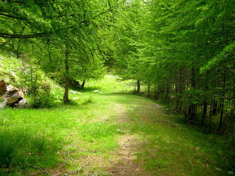 El tupido bosque tras pasar Rey