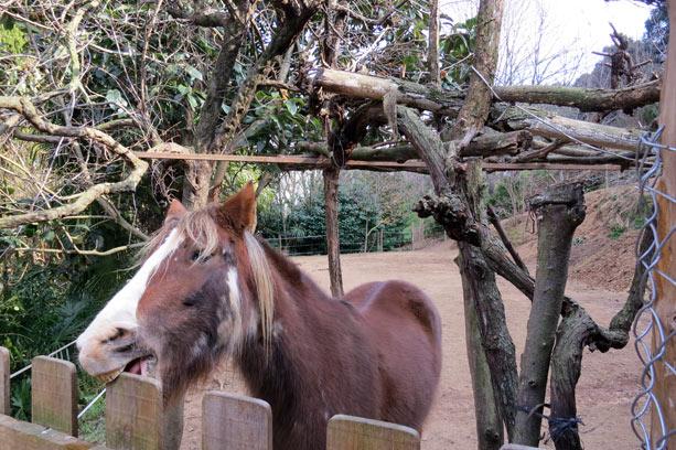 caballo-casa-rural