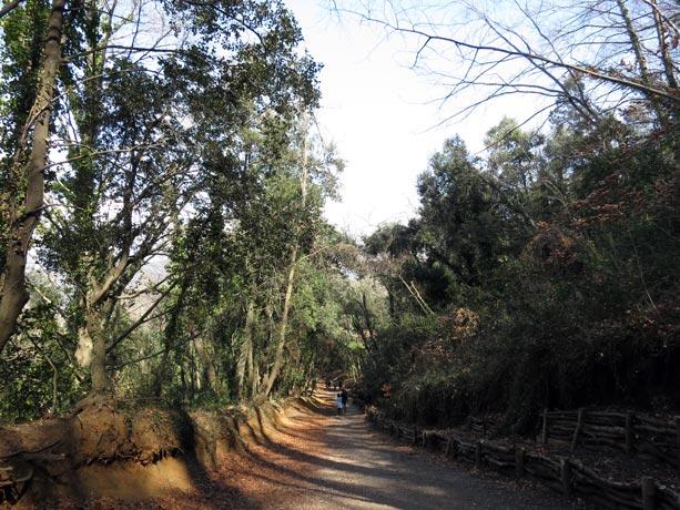 camino-volcan-garrotxa
