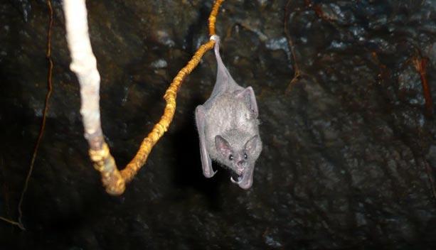 gruta-virgen-bocas-toro