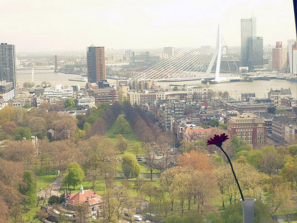 Erasmus_bridge_rotterdam