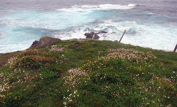 flores-mar-asturias