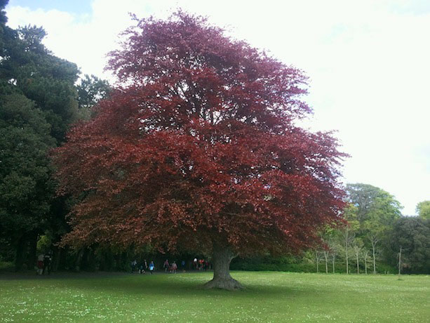 saint-annes-park-tree
