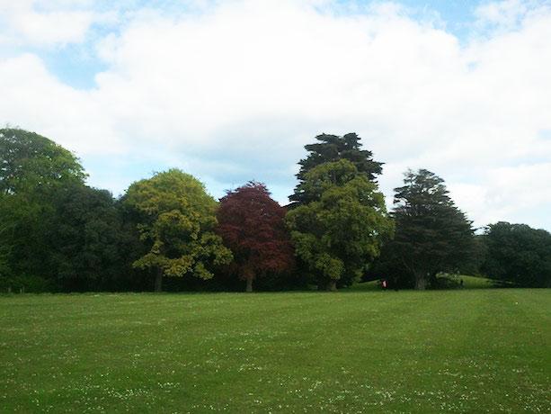 saint-annes-park-trees