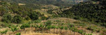 panoramica-viñas-priorat