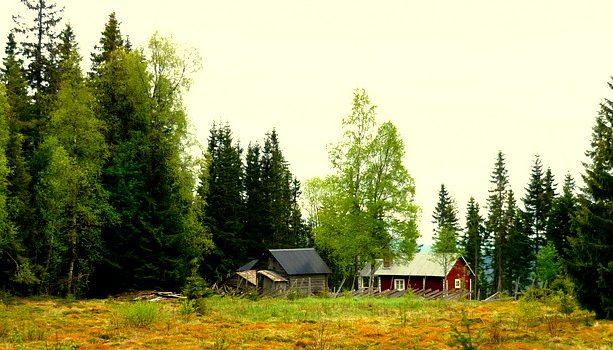 El prado que encontramos en medio del bosque de Långberget.