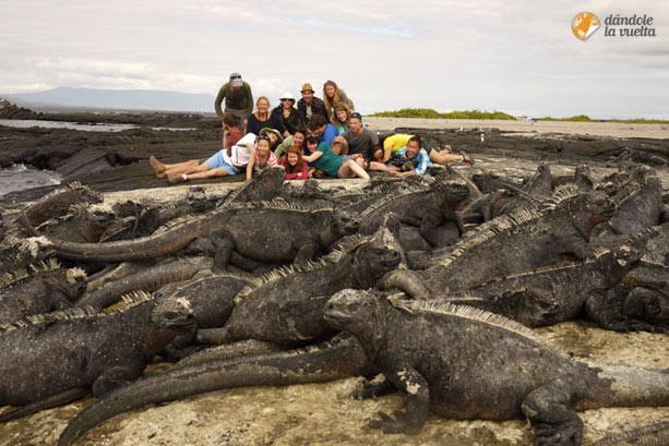 iguanas-galapagos