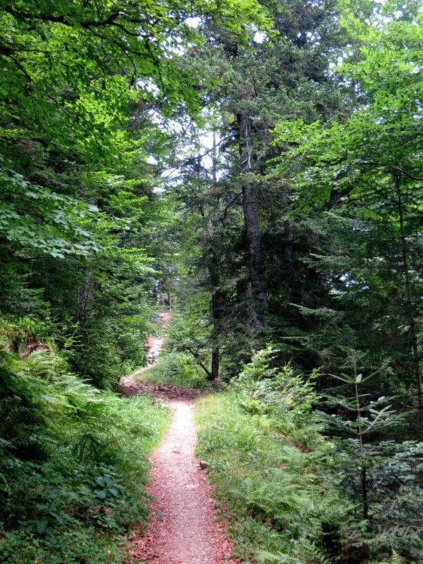 camino-ariege-pirineos