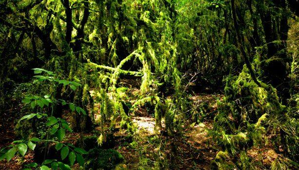 bosque-espeso-arriege