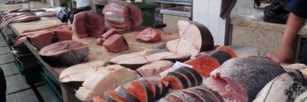 mercado-pescado-madeira