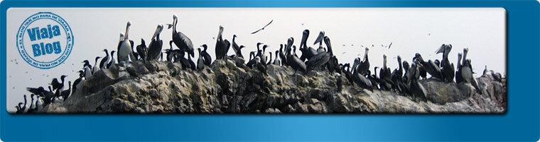 Portada 142: Islas Ballestas, Perú