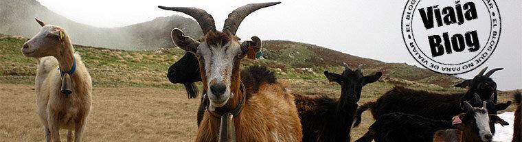Portada 66: Cabras en el Pirineo