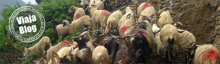 Portada 86: Cabras, Annapurna