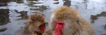 Monos en aguas termales de Yudanaka
