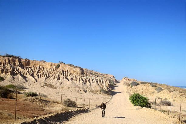 camino-california