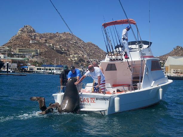 leon-marino-los-cabos
