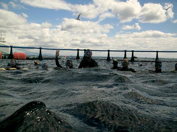 nadando-atunes