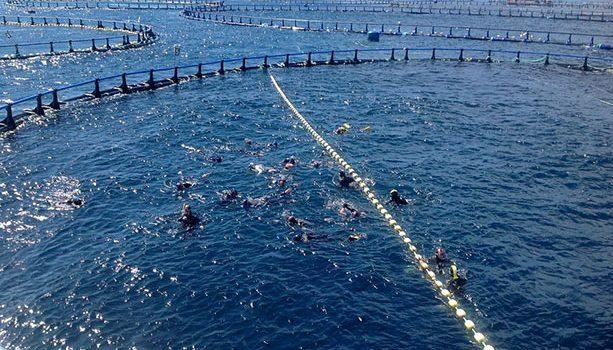 piscina-de-atunes-mediterrano