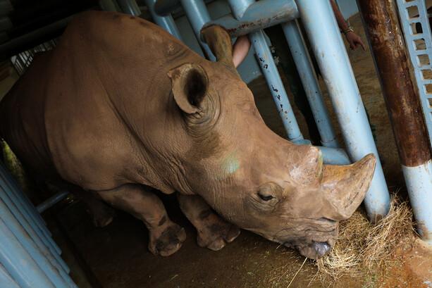 Rinoceronte Blanco en Cabárceno
