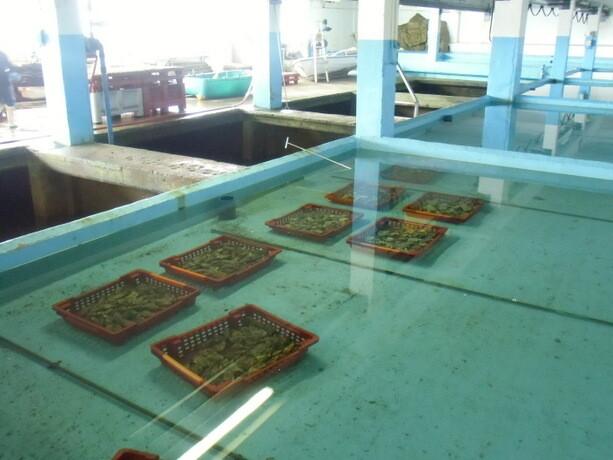Las piscinas donde se dejan las ostras para que pierdan la sal