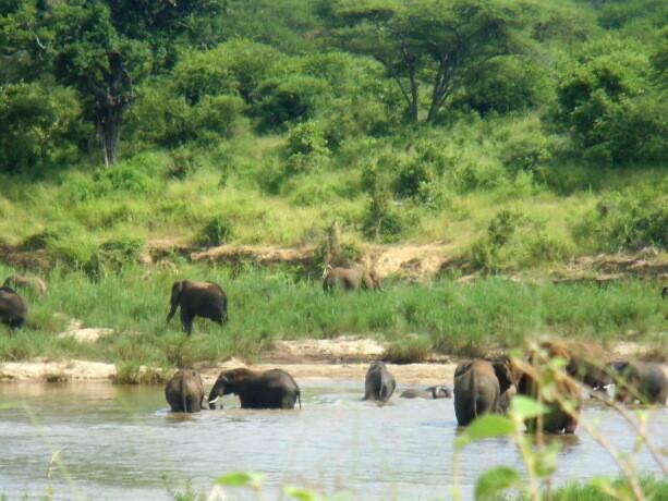 Una manada de elefantes se refresca