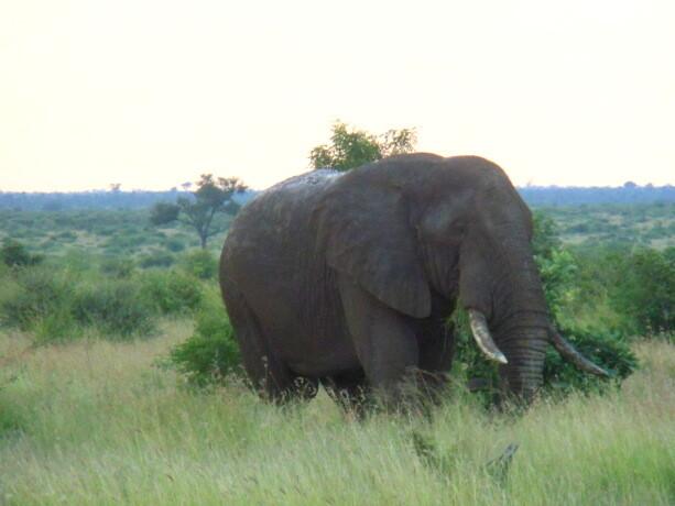 El elefante librepensador
