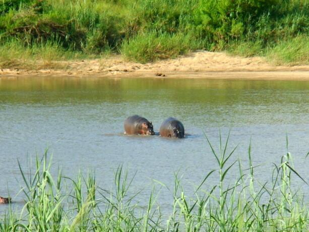 Los dos hipos que estaban cerca del campamento