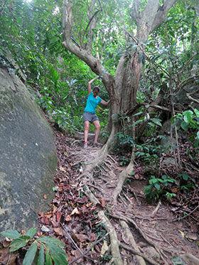 isla-tioman-jungla