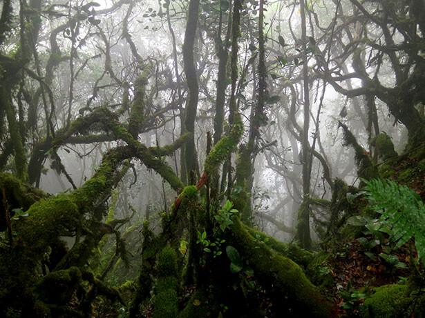 musgo-jungla-mossi