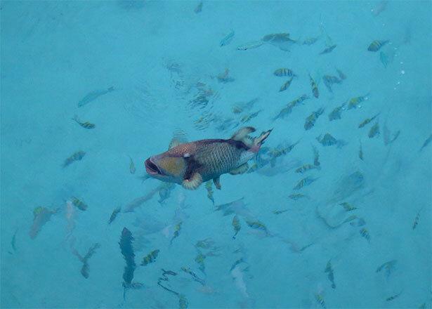 perhentians-pescado