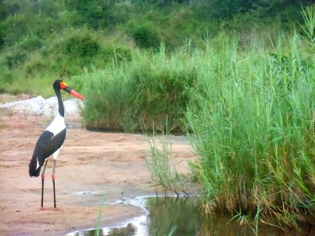 Las aves del Kruger también son dignas de admirar