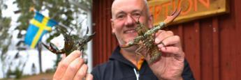 Jan Evanson con cangrejos de río en Ramoa, Ramkvilla