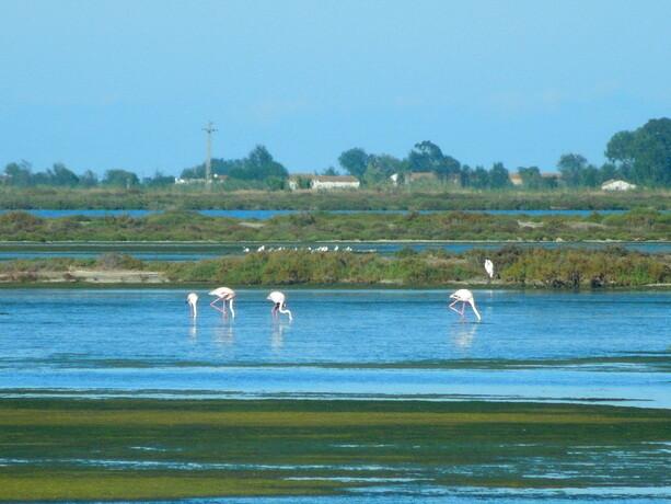 Los bonitos flamencos en las lagunas