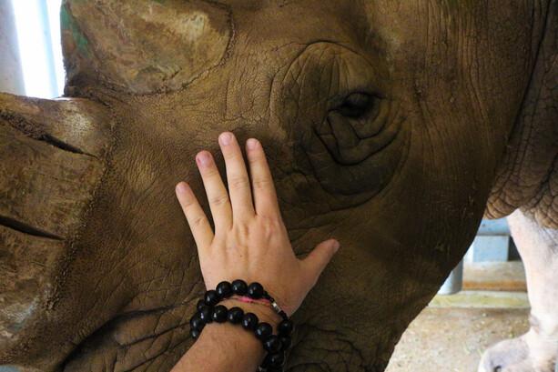 Acariciando rinoceronte en Cabárceno